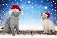 圣诞节与2逗人喜爱的小猫的xmas背景 免版税库存图片