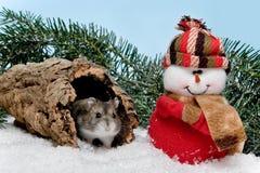圣诞节仓鼠 免版税库存照片