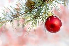 圣诞节会开蓝色钟形花的草 免版税库存图片