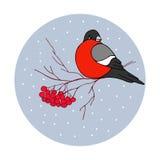 圣诞节例证-与ashberries的红腹灰雀 库存照片