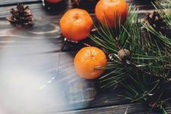 圣诞节假日图象 绿色冷杉分支用蜜桔和a 免版税库存图片