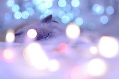 圣诞节假日日历猫,舒适蓝色和白色pi 免版税库存图片