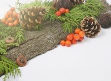 圣诞节假日结构的锥体,花楸浆果,绿色金钟柏分支 与空间的冬天季节性背景为 免版税库存图片