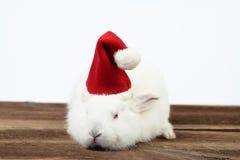 圣诞节兔子 免版税库存图片