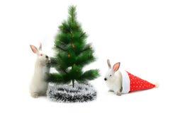 圣诞节兔子 免版税图库摄影