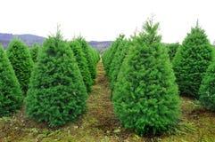 圣诞节农厂俄勒冈结构树 免版税库存图片
