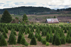 圣诞节农厂俄勒冈结构树 免版税库存照片