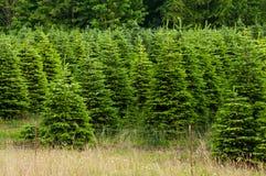 圣诞节农厂结构树 库存图片