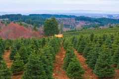 圣诞节农厂结构树 免版税库存图片