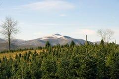 圣诞节农厂结构树 免版税库存照片