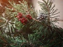 圣诞节冷杉木一张新年明信片的设计 火光拷贝空间 库存照片