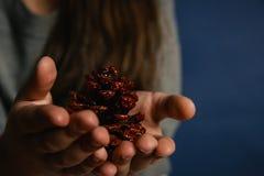 圣诞节冷杉球果对于儿童` s手 库存图片
