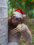 圣诞节动物戴圣诞老人帽子的怠惰 免版税库存照片