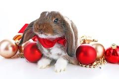 圣诞节动物 逗人喜爱的圣诞节兔子 兔子兔宝宝砍庆祝与xmas中看不中用的物品装饰品的圣诞节在隔绝 库存图片
