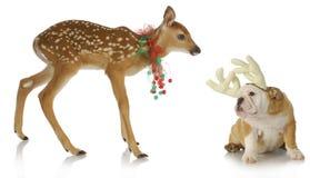 圣诞节动物 库存照片