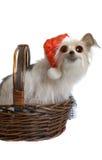 圣诞节可笑小狗 免版税库存图片