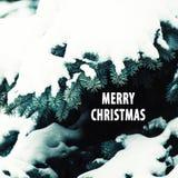 圣诞节和新年与自然冷杉的爪子的` s背景 免版税库存照片