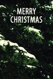 圣诞节和新年与自然冷杉的爪子的` s背景 库存照片