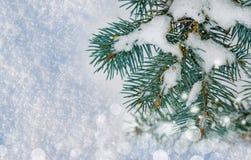 圣诞节和新年度背景 在雪的圣诞树分支,在自然雪的霜, 免版税库存照片