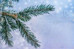 圣诞节和新年度背景 在雪的圣诞树分支,在自然雪的霜, 库存照片