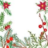 圣诞节和新年的绿叶横幅与手拉的水彩冬天evegreen植物和红色莓果 皇族释放例证