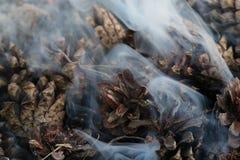 圣诞节和新年图象 明信片 森林在火的冷杉球果 库存照片