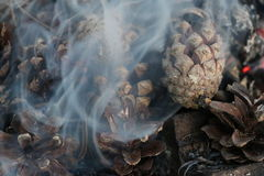 圣诞节和新年图象 明信片 森林在火的冷杉球果 库存图片