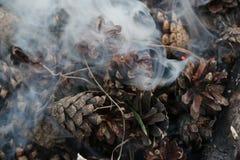 圣诞节和新年图象 明信片 森林在火的冷杉球果 免版税库存图片