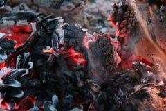 圣诞节和新年图象 明信片 森林在火的冷杉球果 免版税库存照片