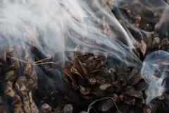 圣诞节和新年图象 明信片 森林在火的冷杉球果 免版税图库摄影