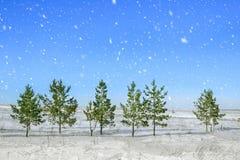 圣诞节和新年度背景 圣诞树在期间的森林里在明亮的蓝天背景的降雪  免版税库存图片