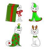 圣诞节和新年猫 免版税库存照片