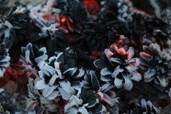 圣诞节和新年imege 明信片 森林在火的冷杉球果 库存图片