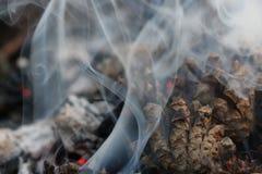 圣诞节和新年imege 明信片 森林在火的冷杉球果 库存照片