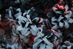 圣诞节和新年imege 明信片 森林在火的冷杉球果 免版税图库摄影