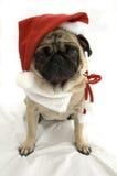 圣诞节哈巴狗 库存照片