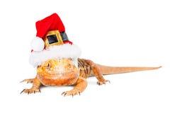 圣诞节圣诞老人有胡子的龙 免版税图库摄影