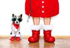 圣诞节圣诞老人狗 免版税库存照片