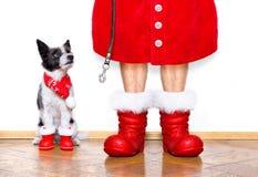 圣诞节圣诞老人狗 库存图片