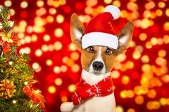 圣诞节圣诞老人狗 库存照片
