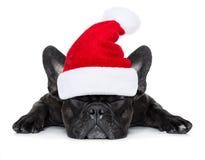 圣诞节圣诞老人狗 免版税图库摄影