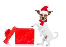 圣诞节圣诞老人狗 免版税库存图片
