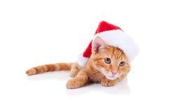 圣诞节圣诞老人猫 库存照片