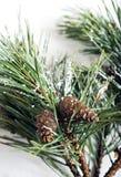 圣诞节在一个木板的杉树 免版税库存照片