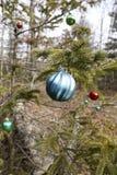 圣诞节在森林里 免版税库存照片