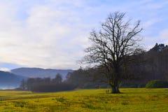 圣诞节在苏格兰高地, Strontian 2017年 免版税库存图片