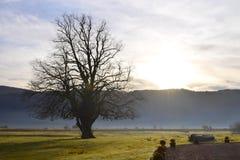 圣诞节在苏格兰高地, Strontian 2017年 图库摄影