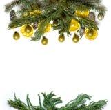 圣诞节在被隔绝的白色背景的杉树分支边界框架  图库摄影