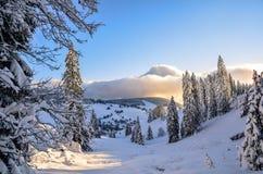 圣诞节在Todtnauberg雪的黑森林冬天 免版税图库摄影