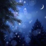 圣诞节多雪森林的晚上 库存照片
